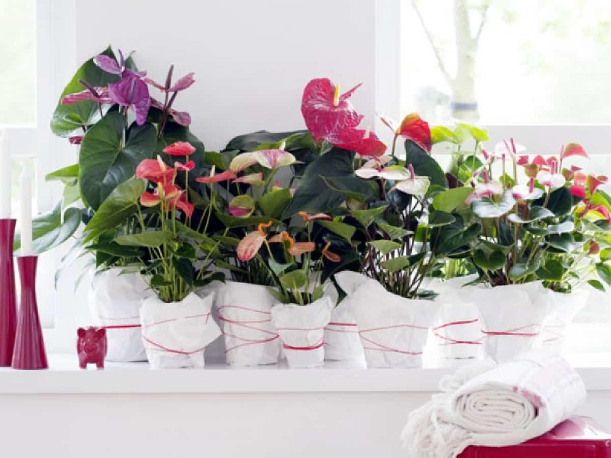 plantas de interior ideales para decorar tu hogar durante todo el ano 6