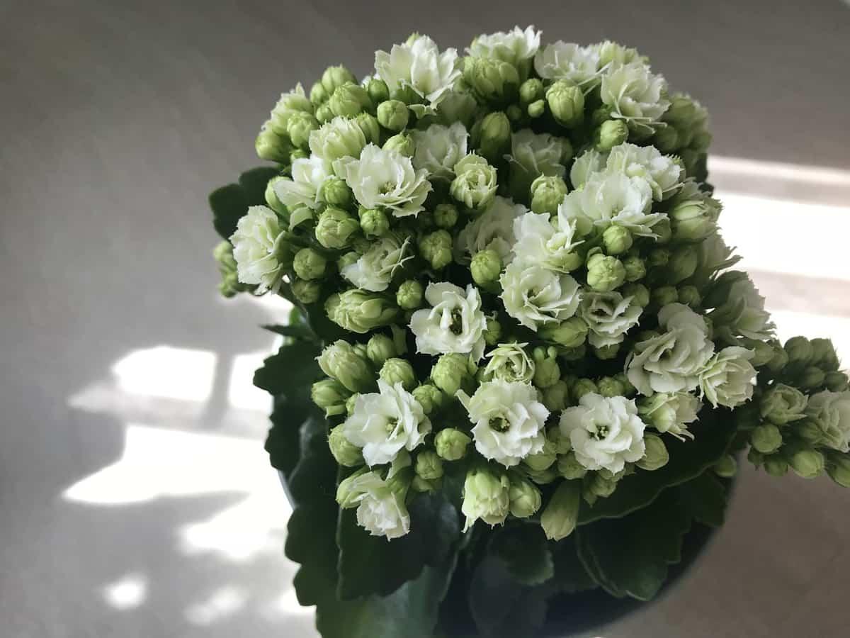 plantas de interior ideales para decorar tu hogar durante todo el ano 7