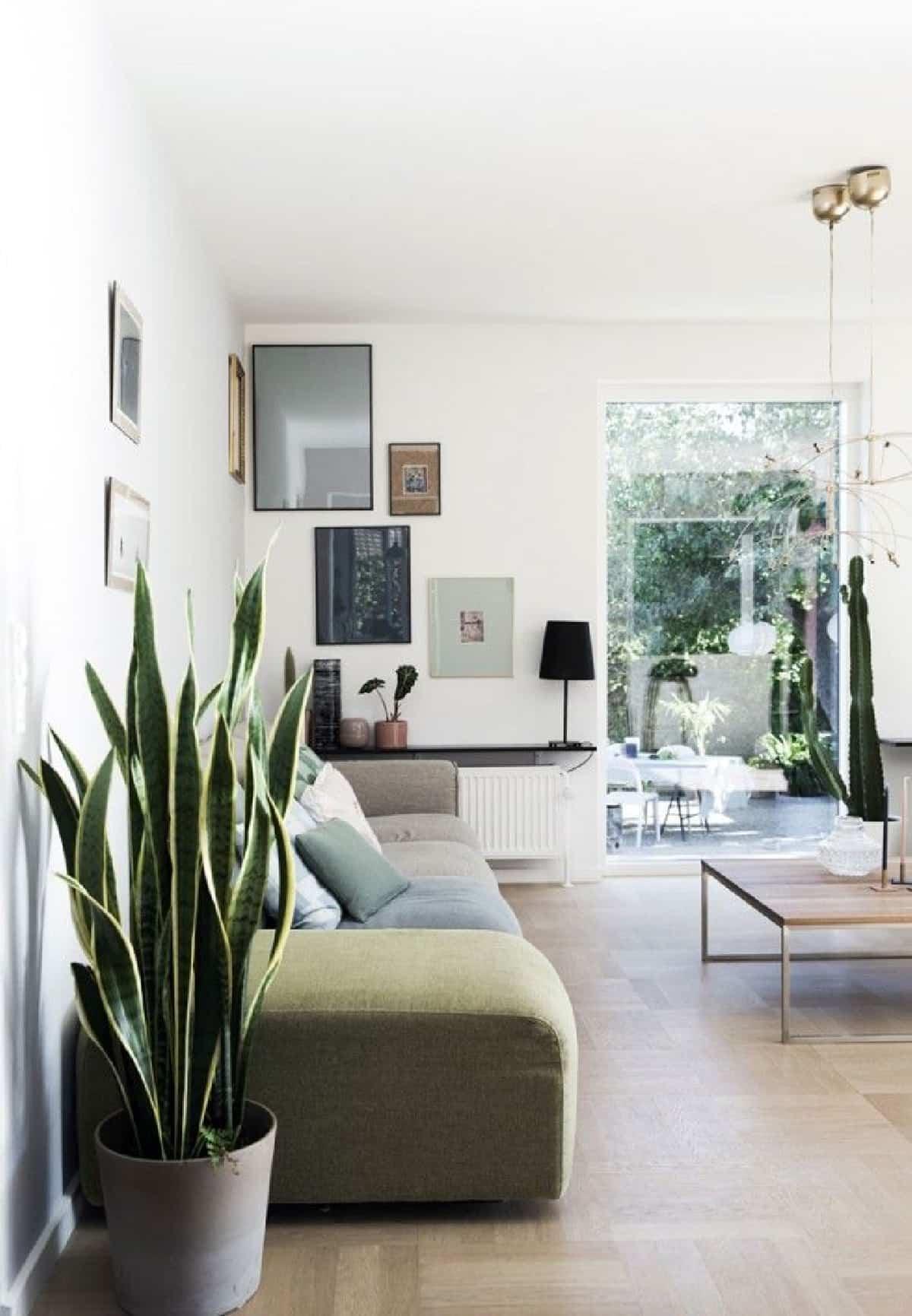 plantas de interior que purifican el aire de tu hogar 1