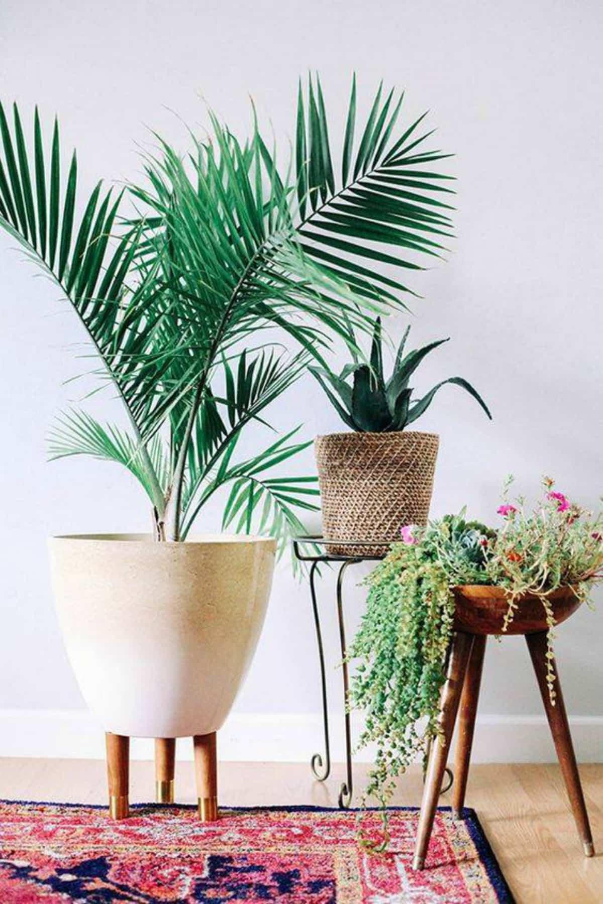 plantas de interior que purifican el aire de tu hogar 10