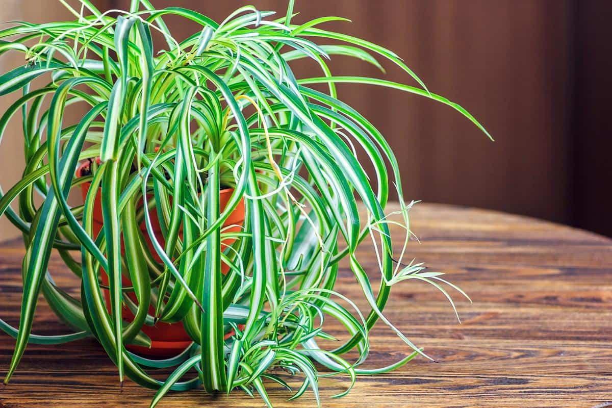 plantas de interior que purifican el aire de tu hogar 2