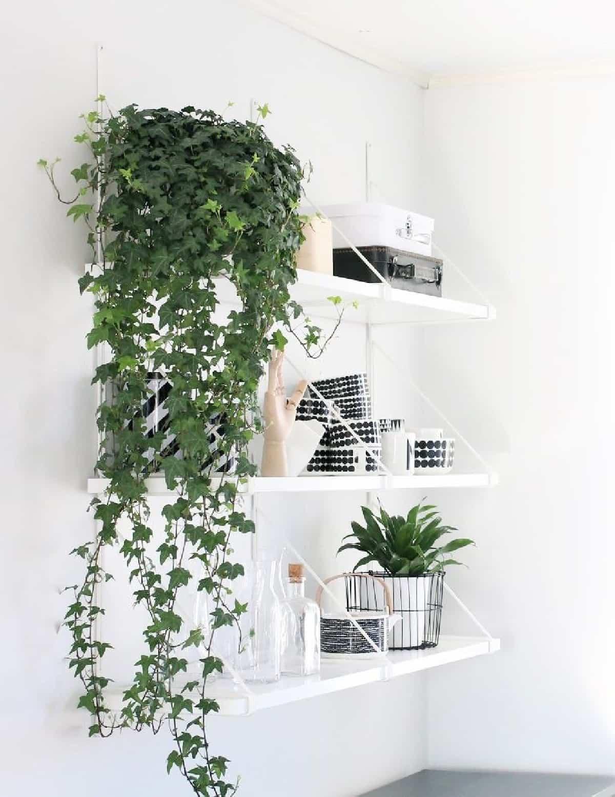 plantas de interior que purifican el aire de tu hogar 4