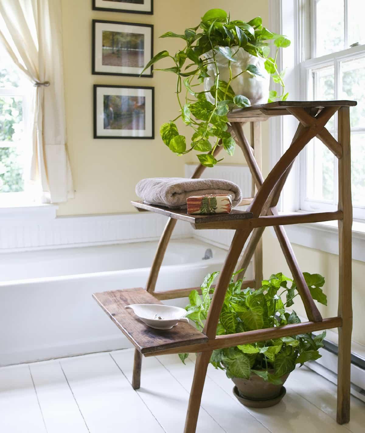 plantas de interior que purifican el aire de tu hogar 5