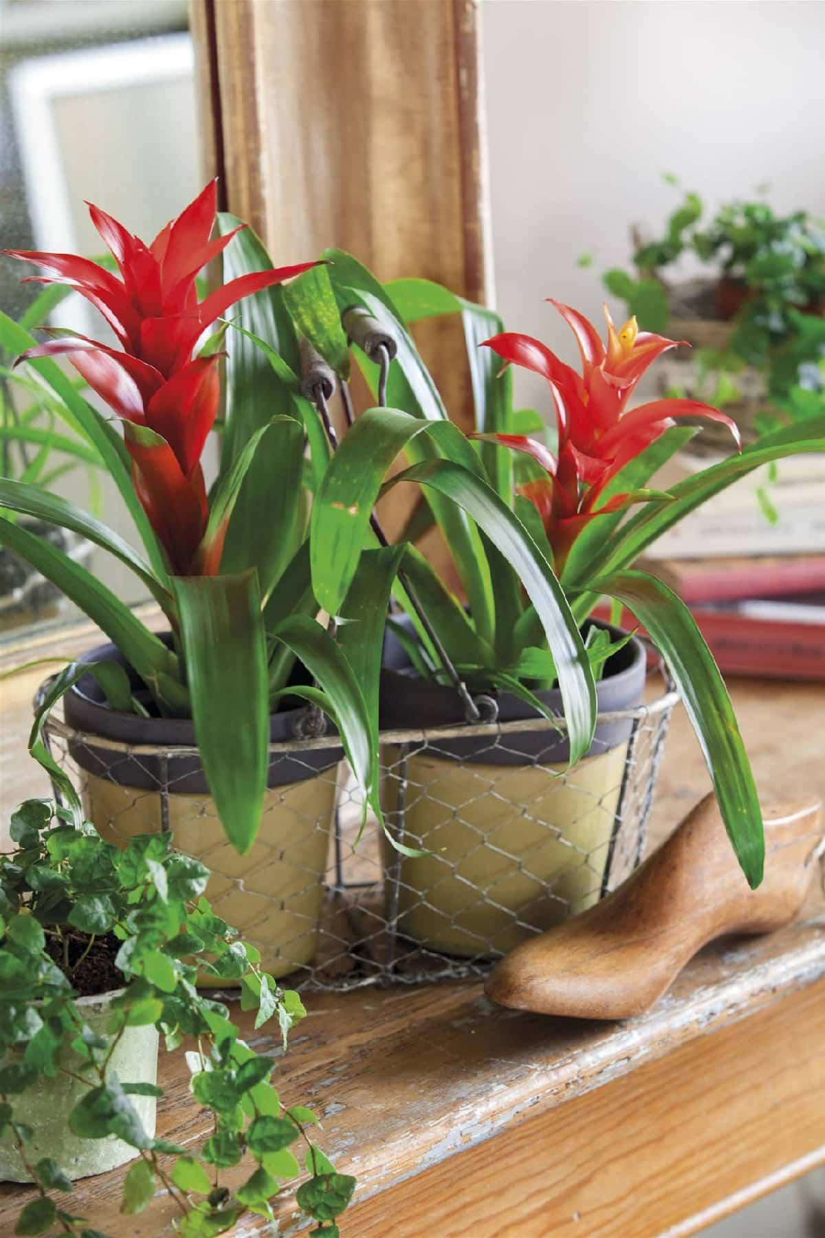 plantas de interior que purifican el aire de tu hogar 6