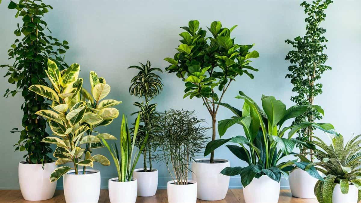 7 Plantas de interior que purifican el aire de tu hogar