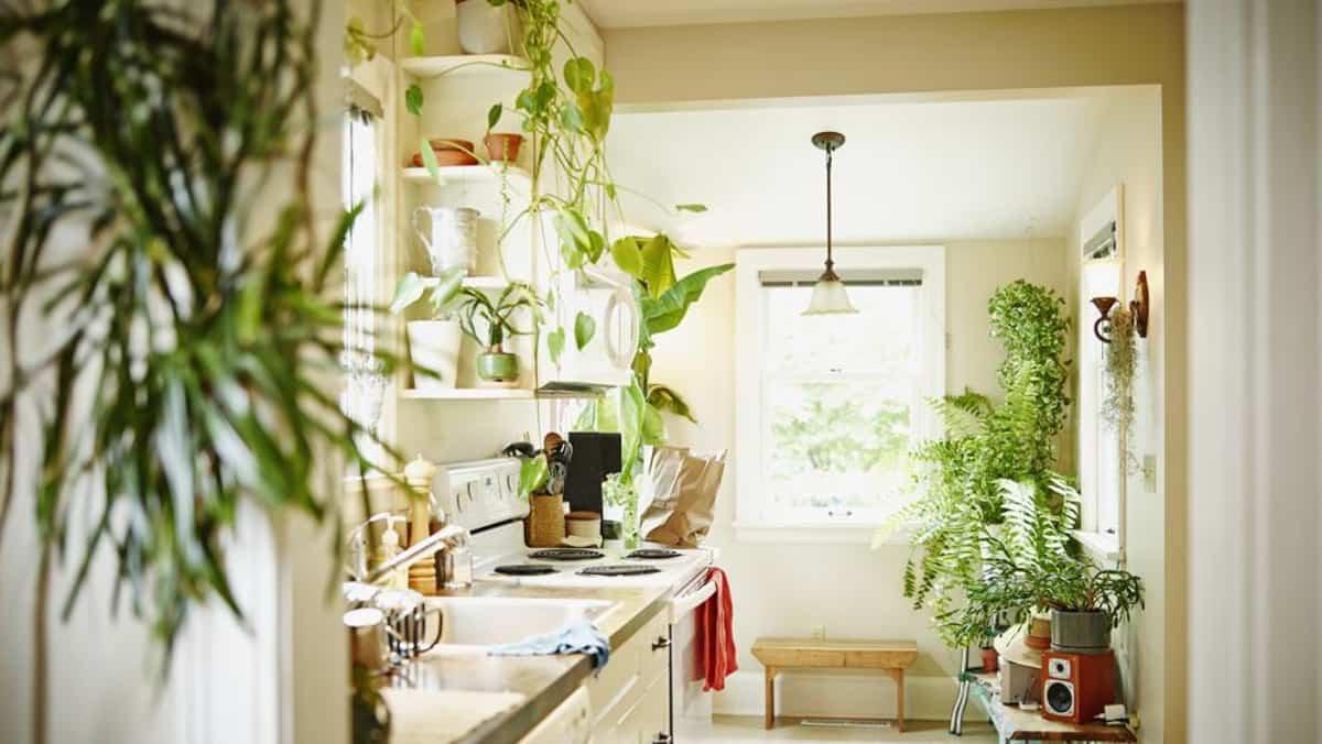 plantas de interior que purifican el aire de tu hogar 9