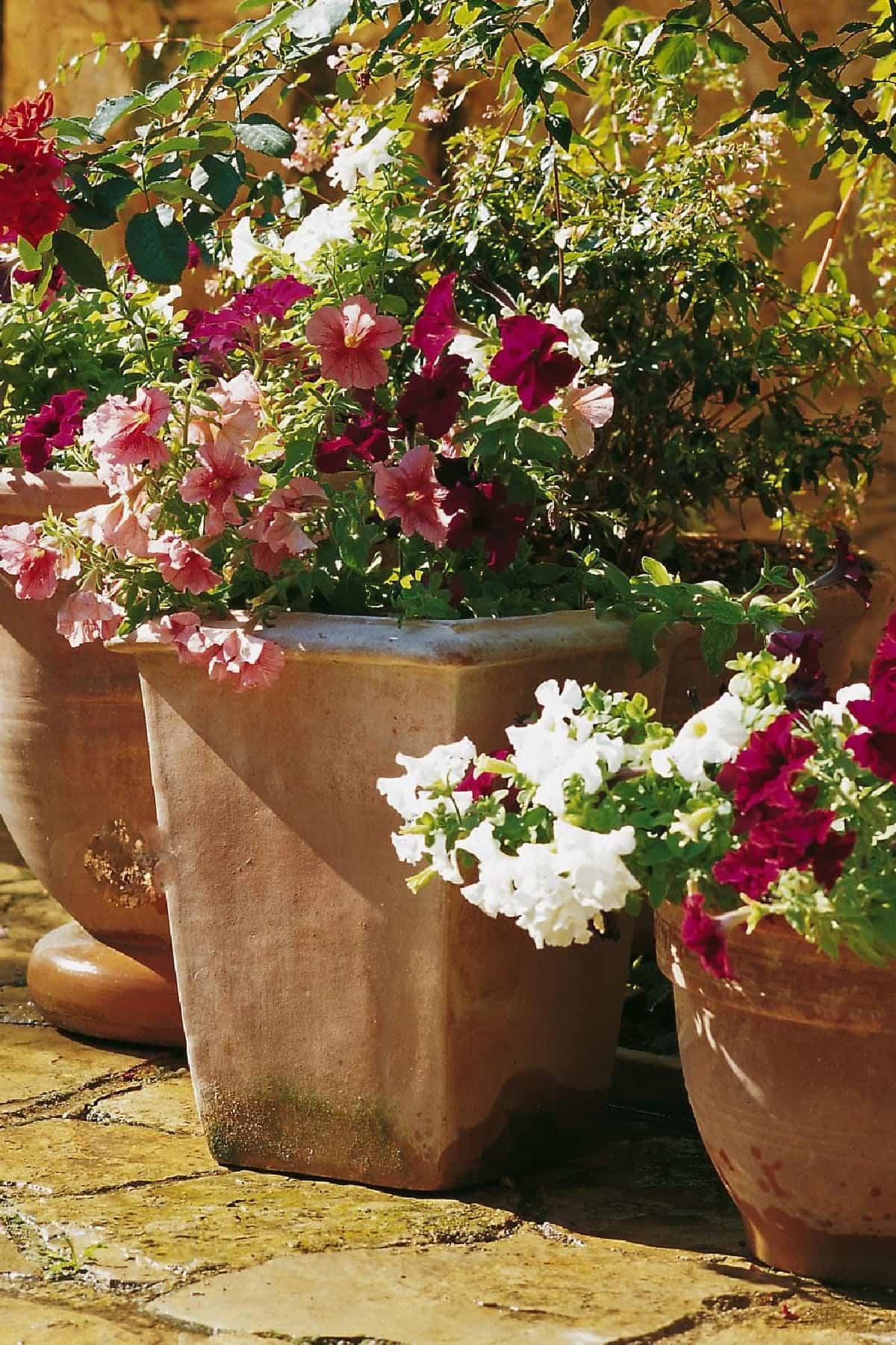 plantas para llenar la terraza de primavera 2