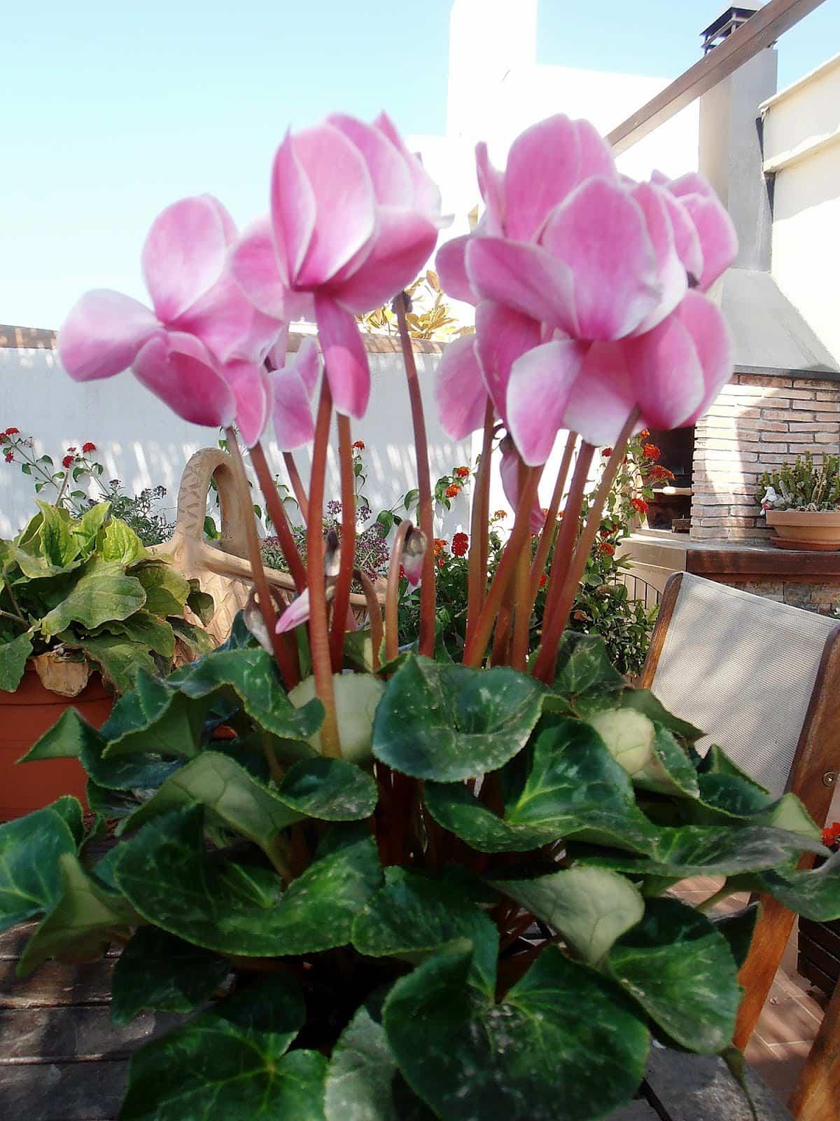 plantas para llenar la terraza de primavera 3