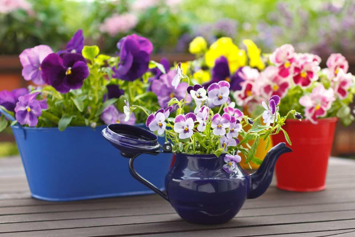 plantas para llenar la terraza de primavera 4