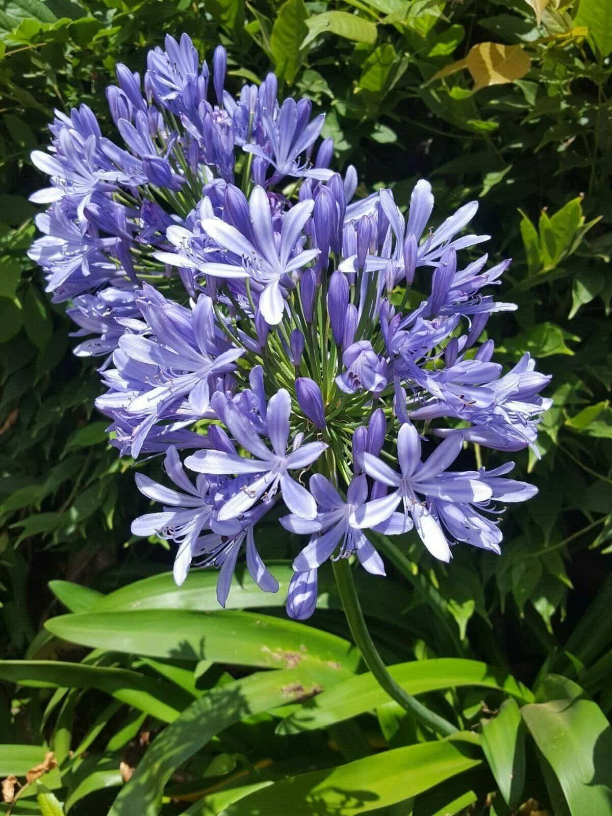 plantas para llenar la terraza de primavera 6