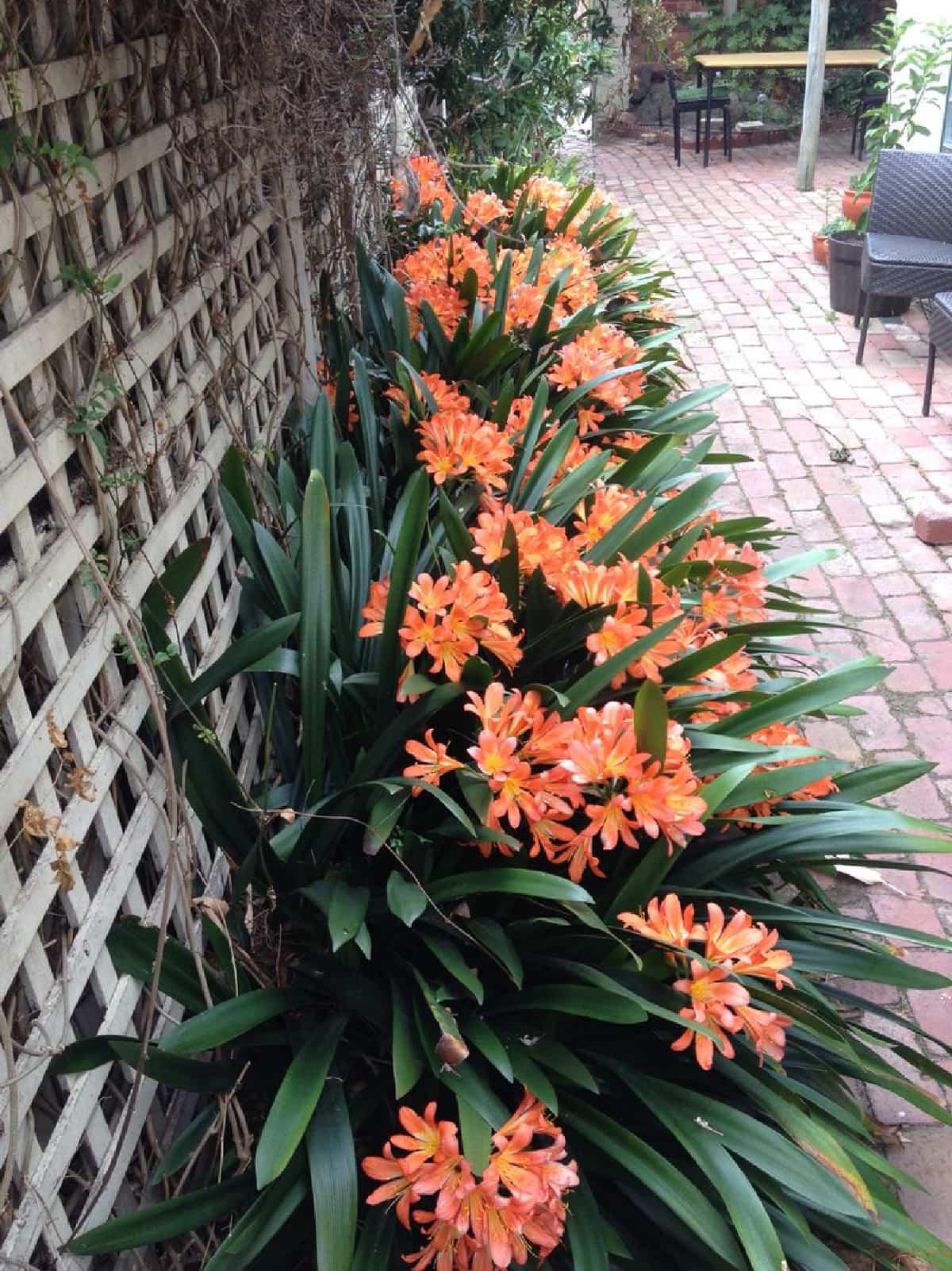 plantas para llenar la terraza de primavera 7