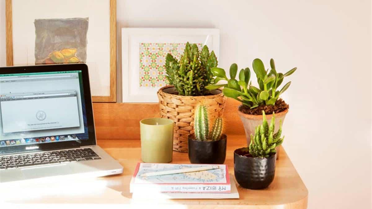 plantas para colocar junto al ordenador 1