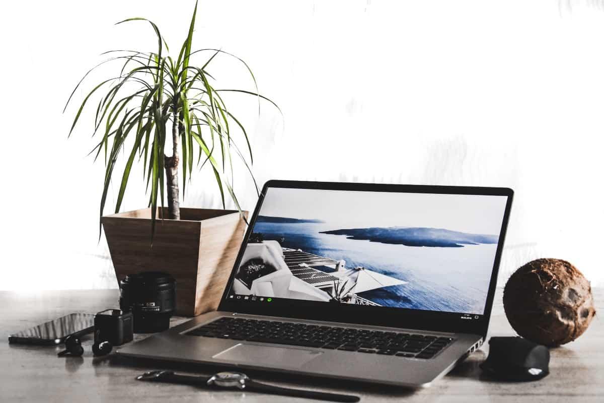 plantas para colocar junto al ordenador 2