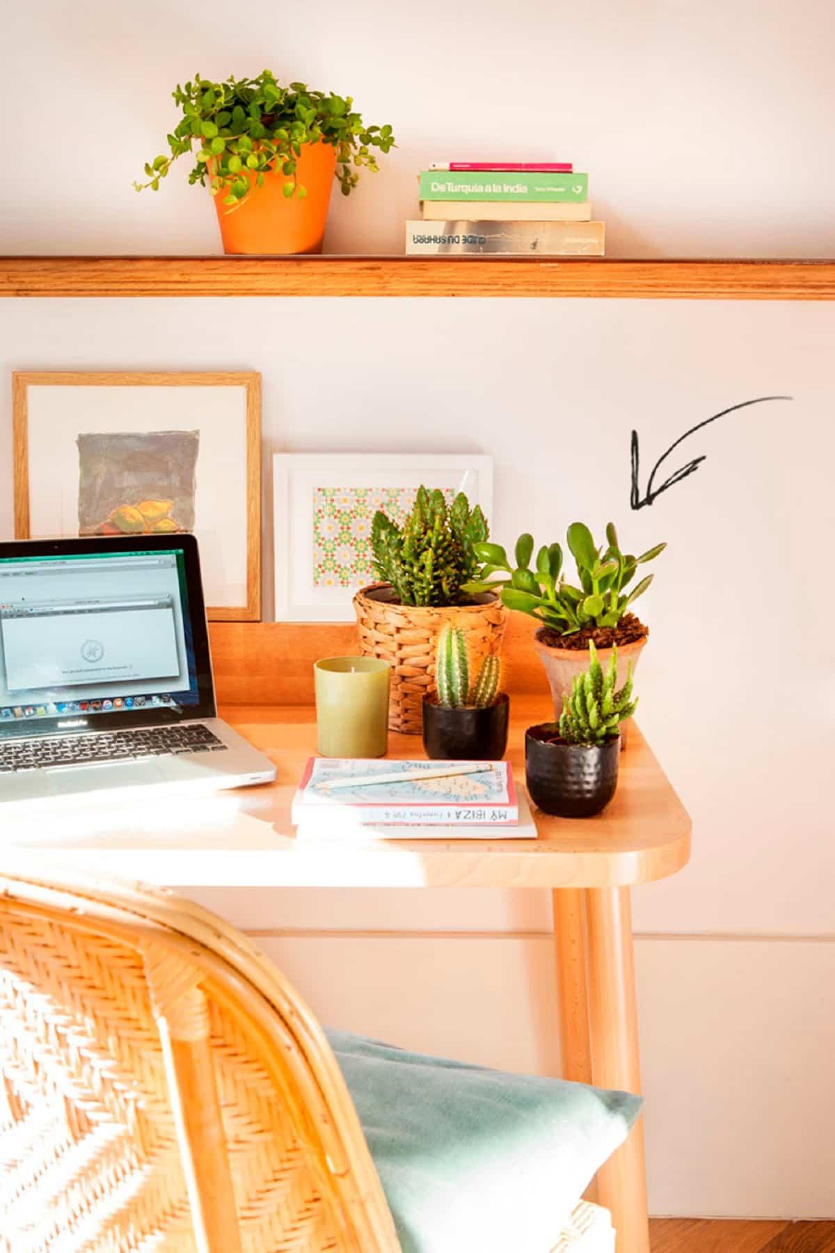plantas para colocar junto al ordenador 9