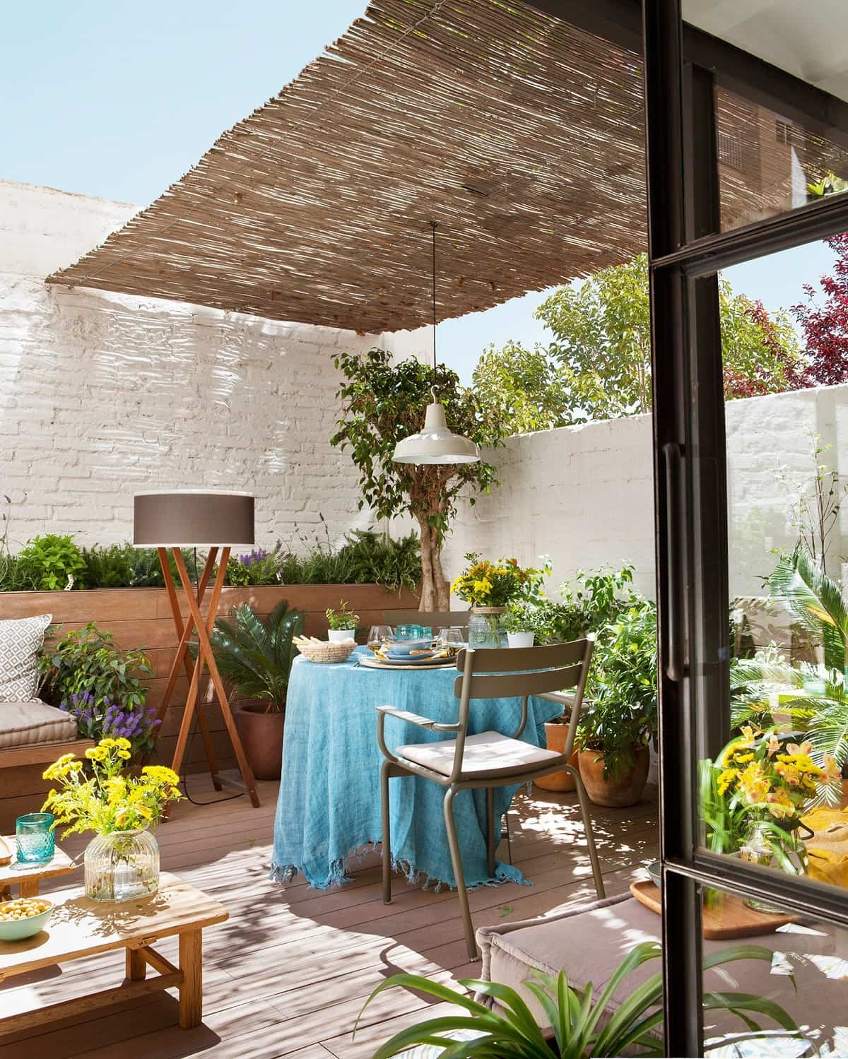 como mantener tus plantas libres de enfermedades y plagas 3