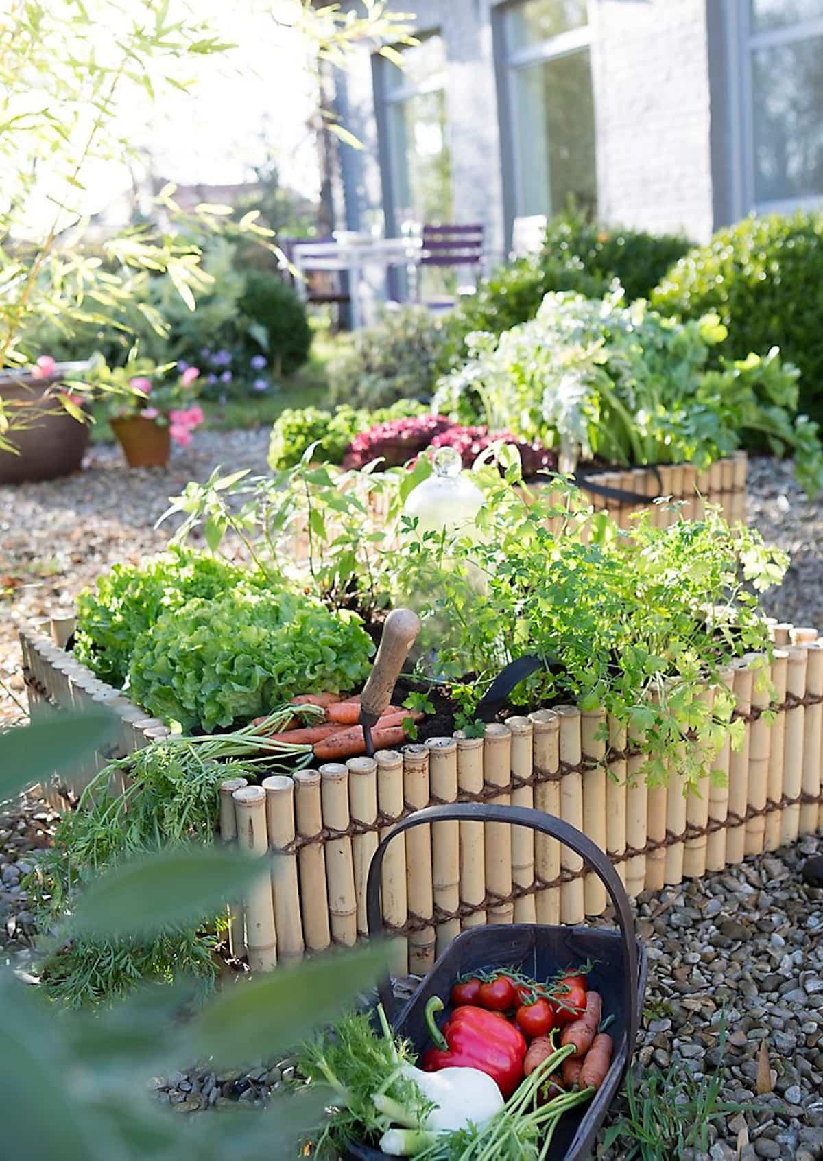 como mantener tus plantas libres de enfermedades y plagas 4