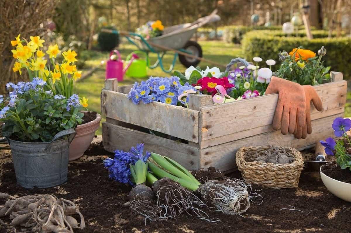 como mantener tus plantas libres de enfermedades y plagas 5