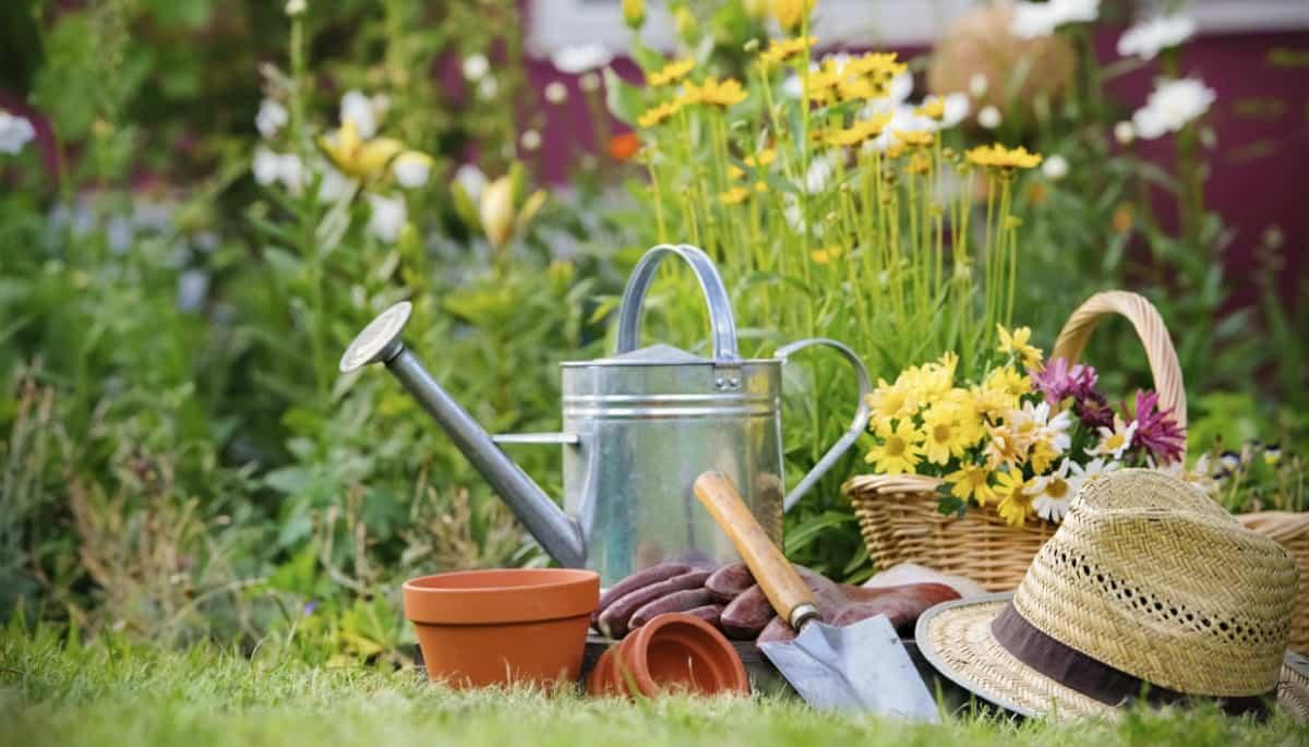 como mantener tus plantas libres de enfermedades y plagas 9