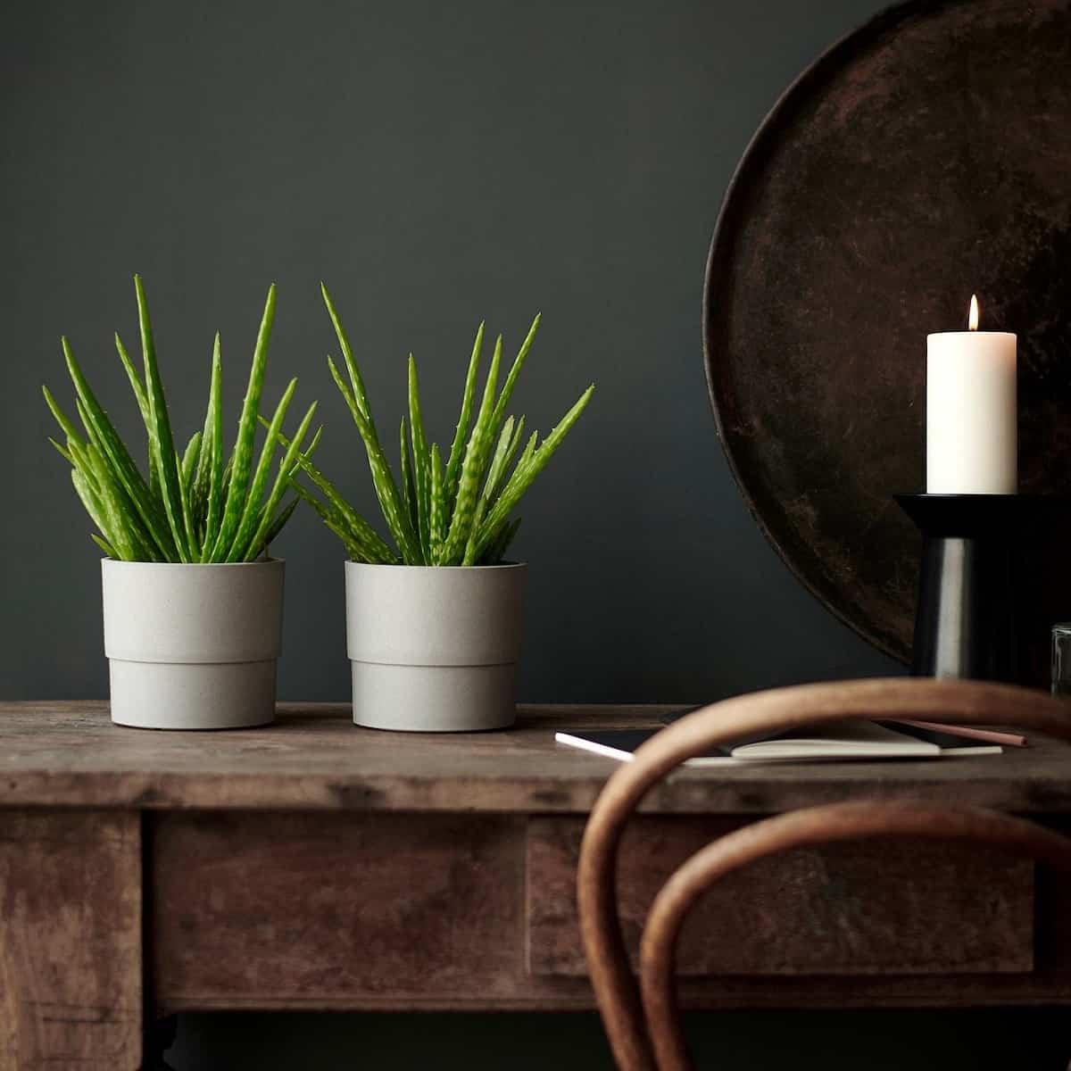 5 plantas que te ayudaran a refrescar el ambiente 2
