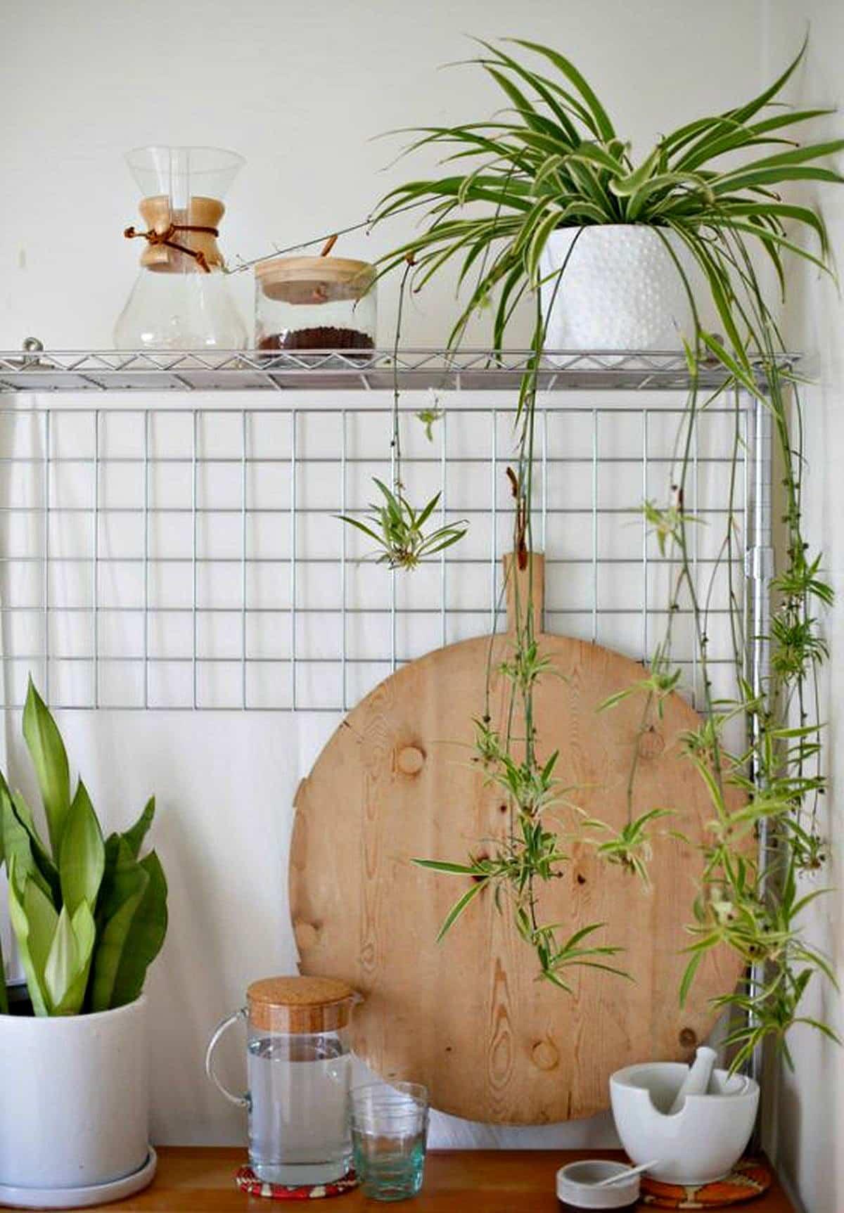 5 plantas que te ayudaran a refrescar el ambiente 3