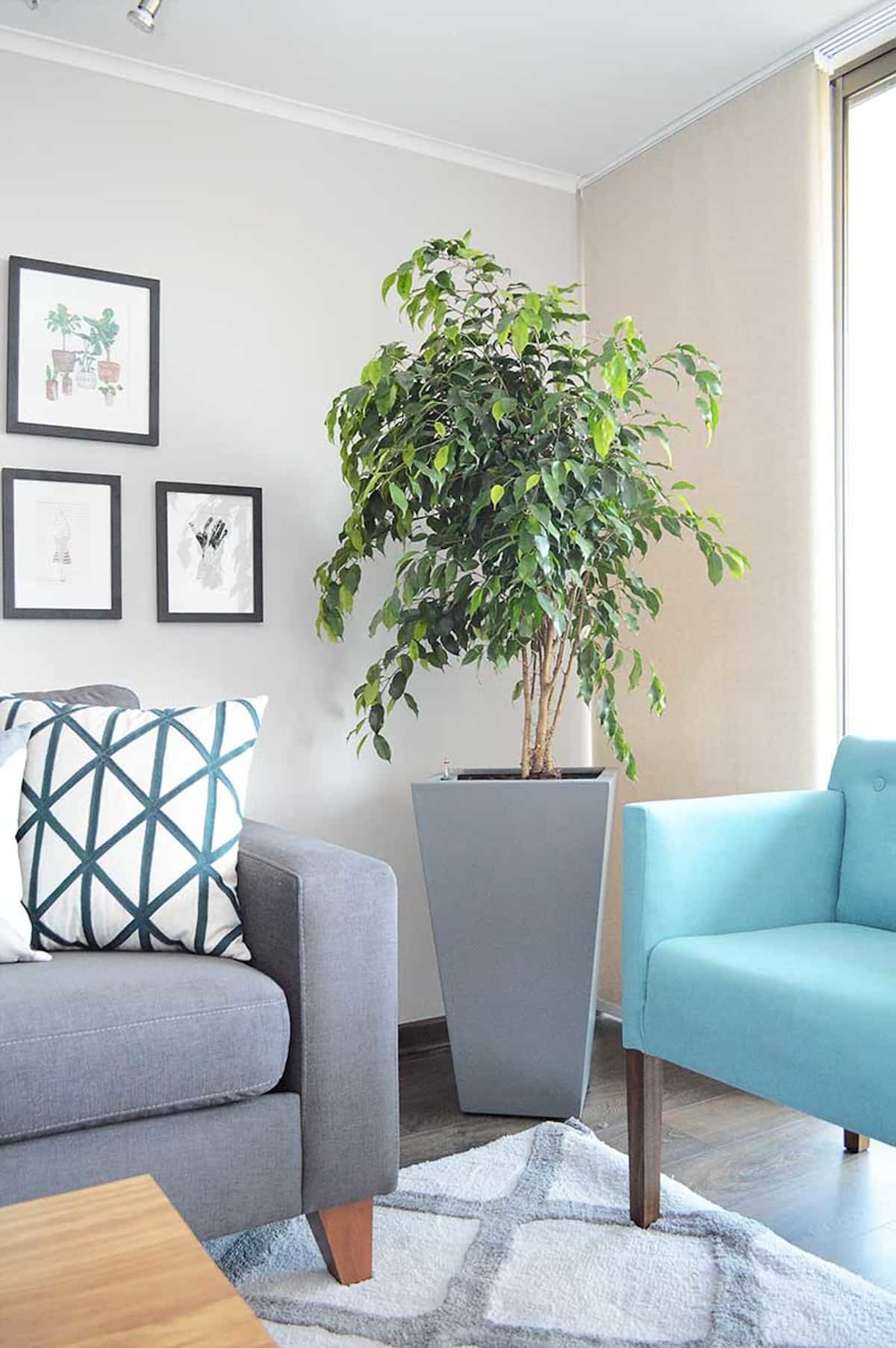 5 plantas que te ayudaran a refrescar el ambiente 4