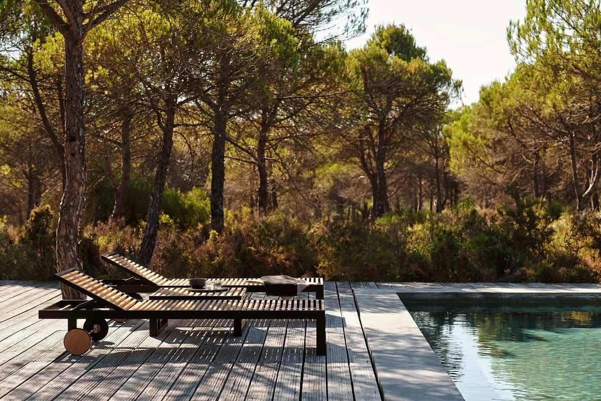 claves para elegir las plantas y arboles en la zona de la piscina 6