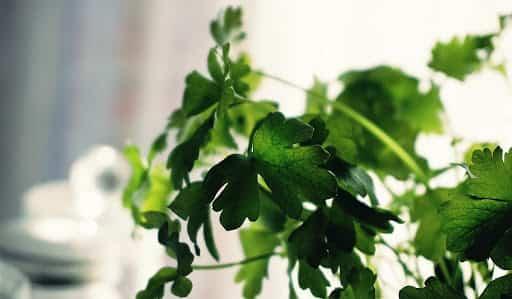 plantas para hacer tu propio jardin medicinal 1