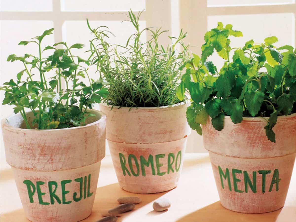 5 plantas esenciales para crear tu propio jardín medicinal