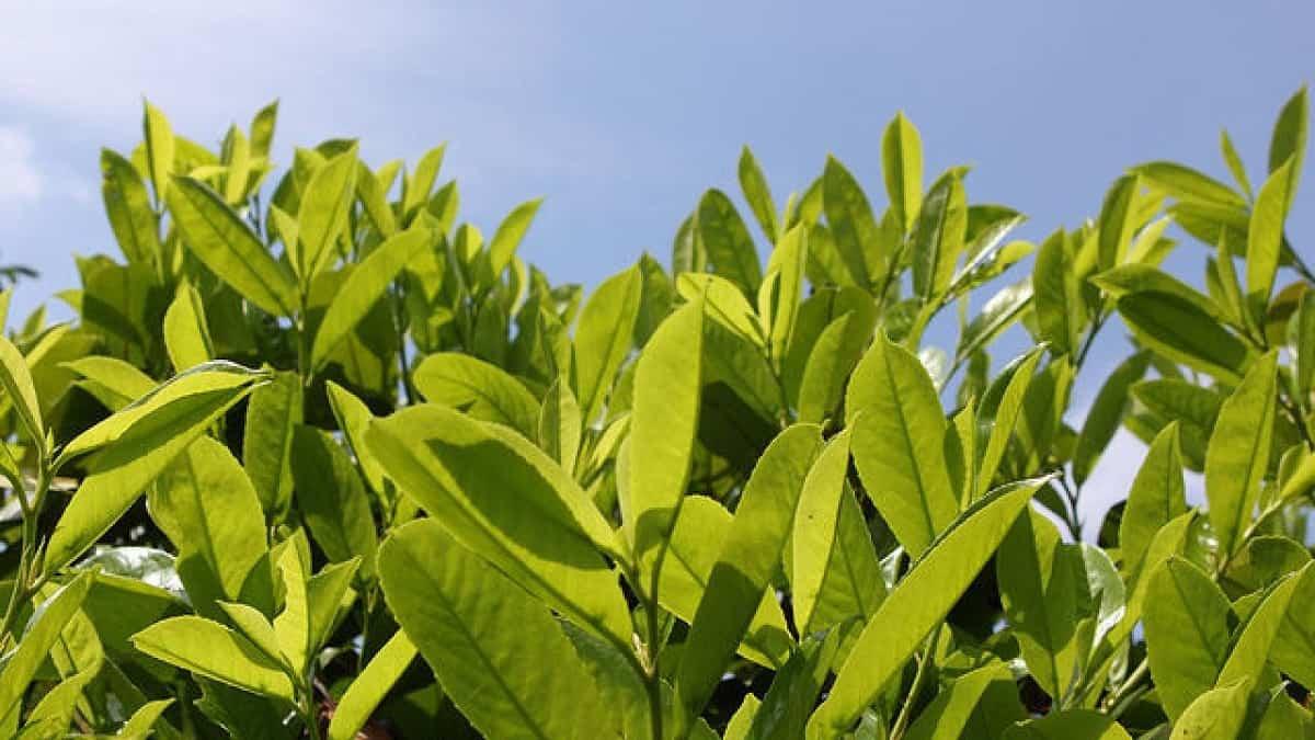 plantas para hacer tu propio jardin medicinal 4