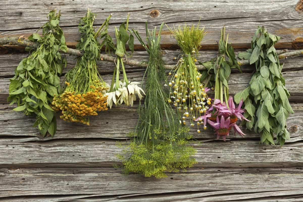plantas para hacer tu propio jardin medicinal 6
