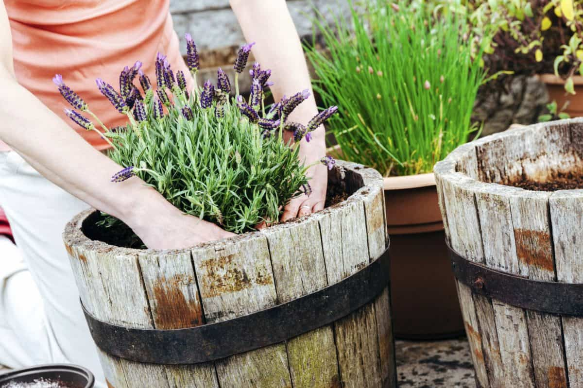 plantas para hacer tu propio jardin medicinal 7