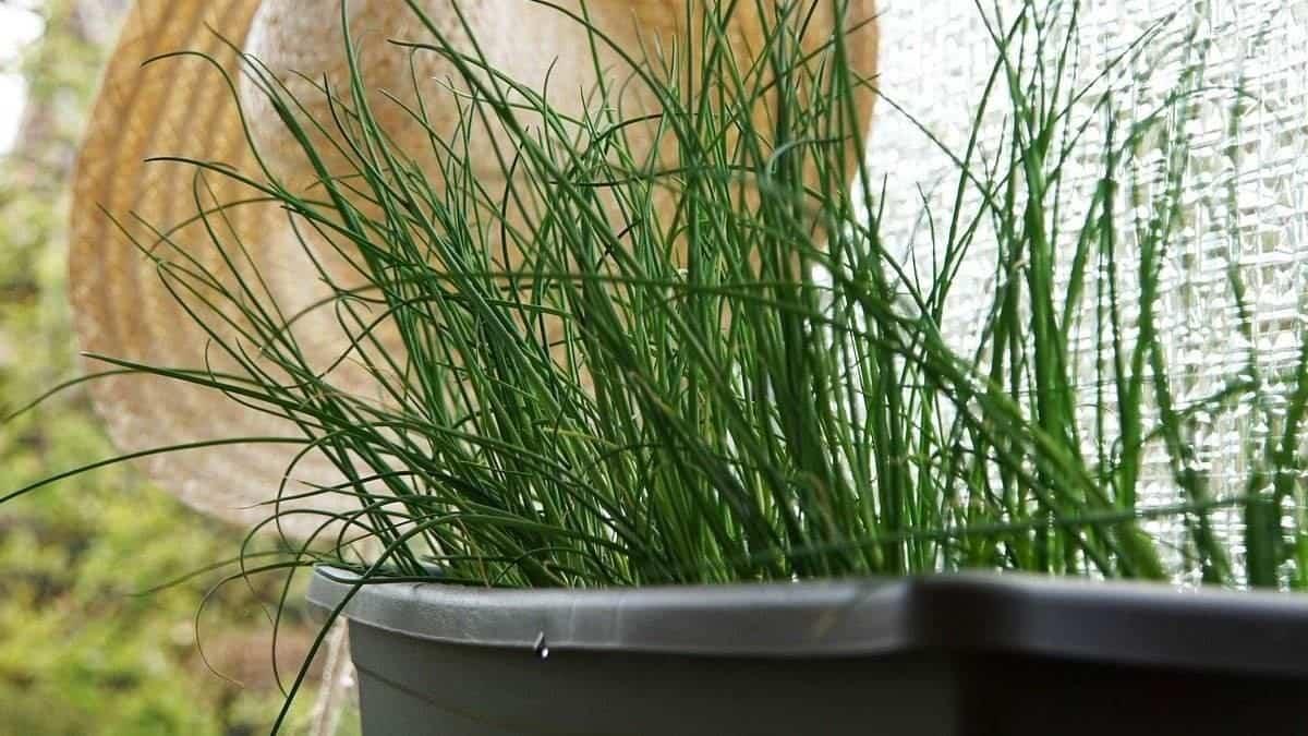 plantas para hacer tu propio jardin medicinal 8