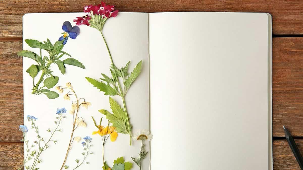 descubre las diversas tecnicas para secar flores en casa 2