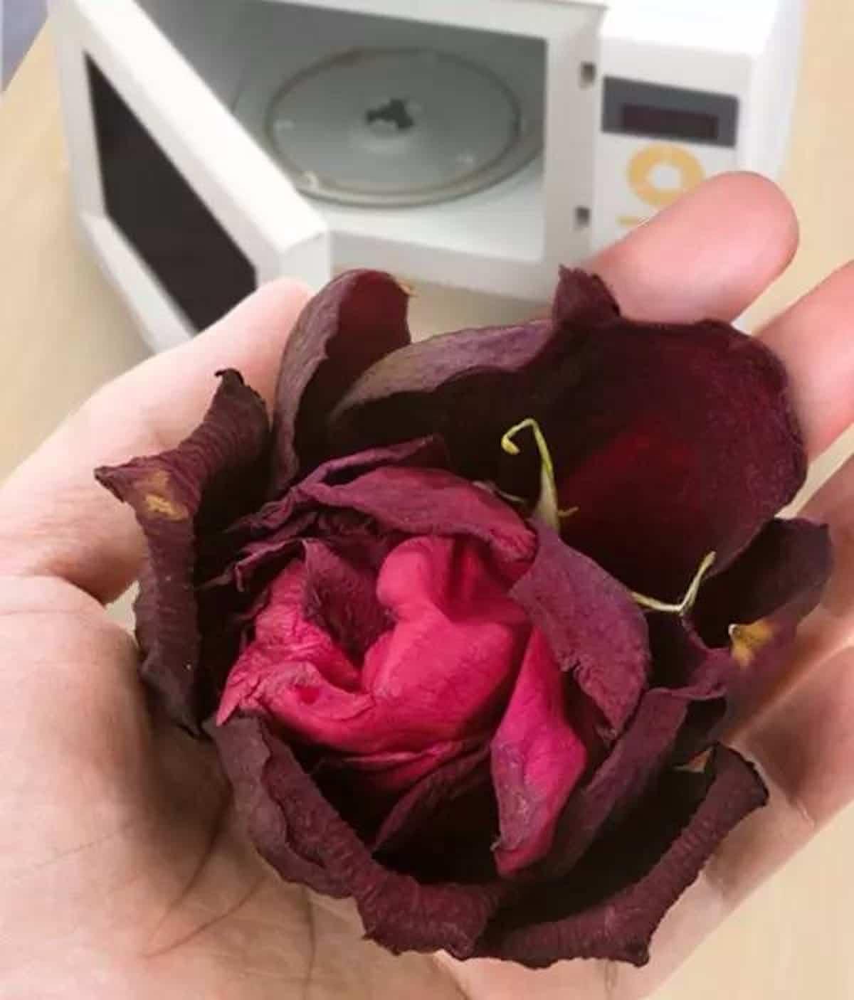 descubre las diversas tecnicas para secar flores en casa 4