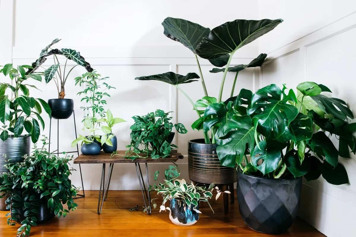 Descubre las plantas de interior que no necesitan luz natural