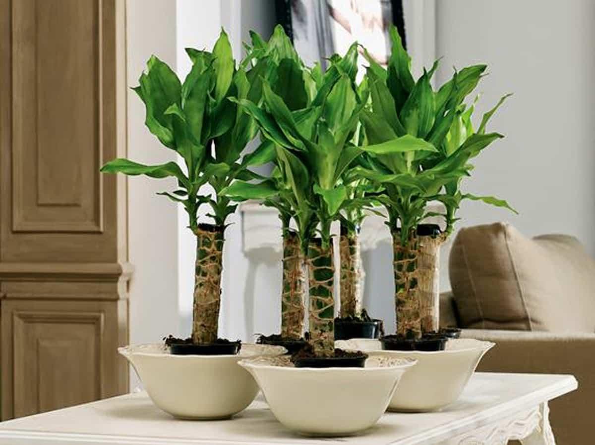 descubre las plantas de interior que no necesitan luz natural 2