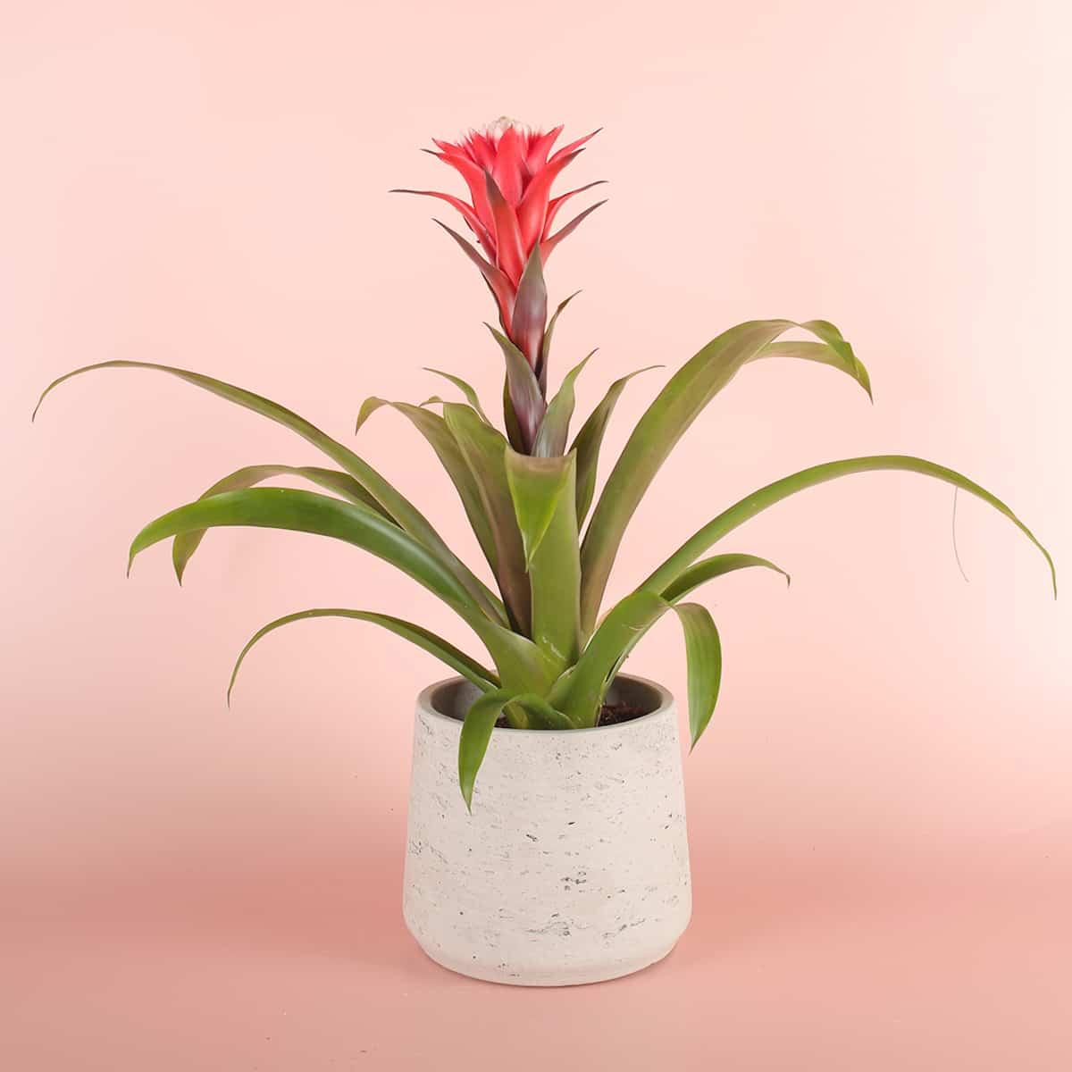 descubre las plantas de interior que no necesitan luz natural 3