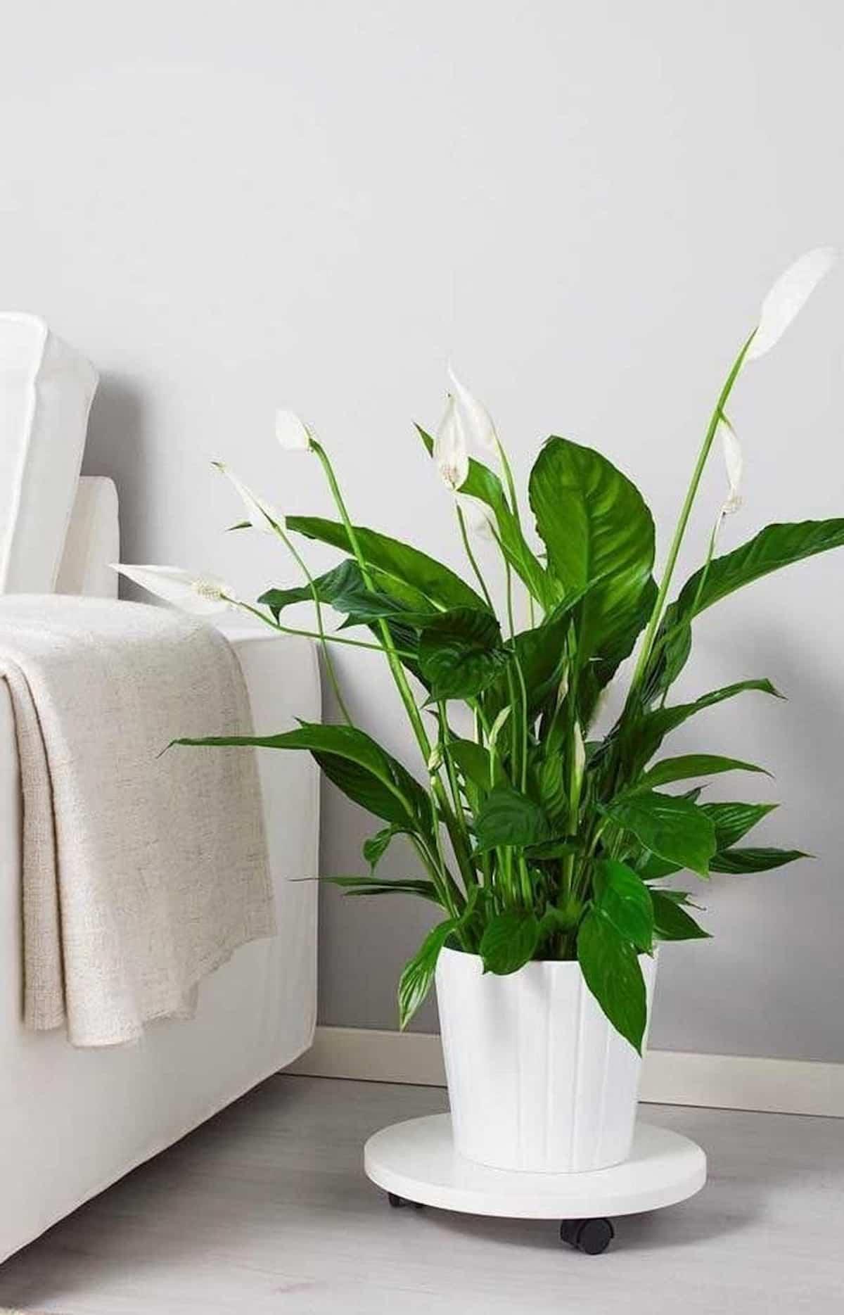 descubre las plantas de interior que no necesitan luz natural 6
