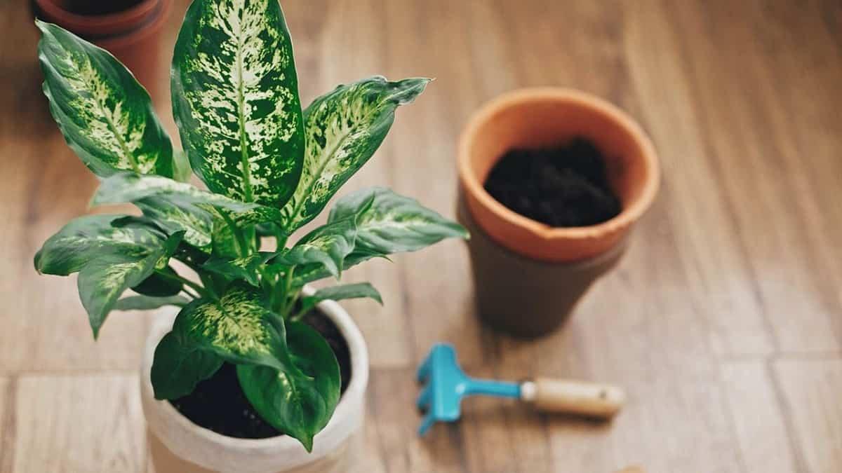descubre las plantas de interior que no necesitan luz natural 7