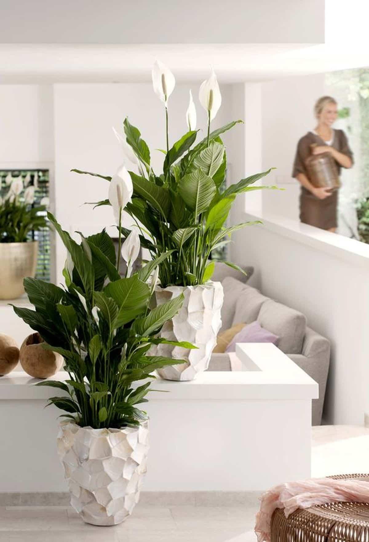 como purificar el aire en casa y mantenerlo limpio 10