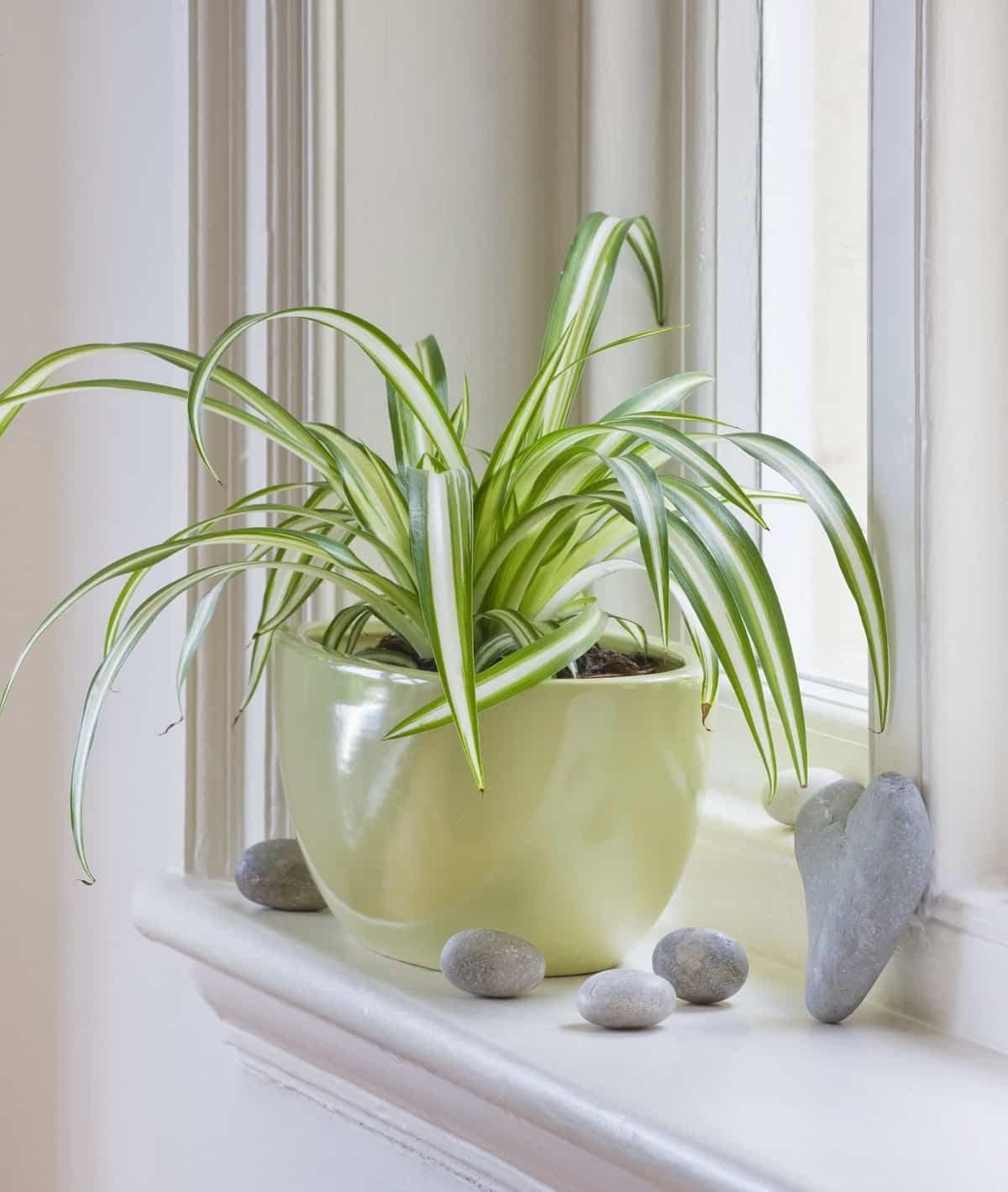 como purificar el aire en casa y mantenerlo limpio 3