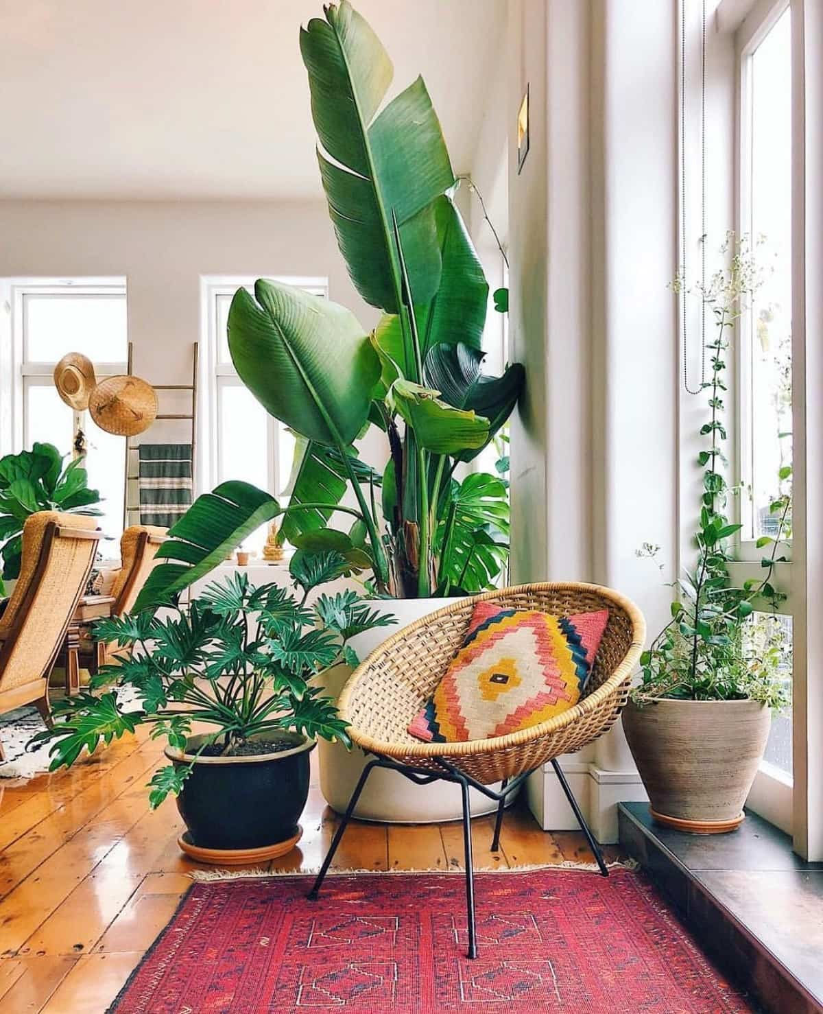 como purificar el aire en casa y mantenerlo limpio 4