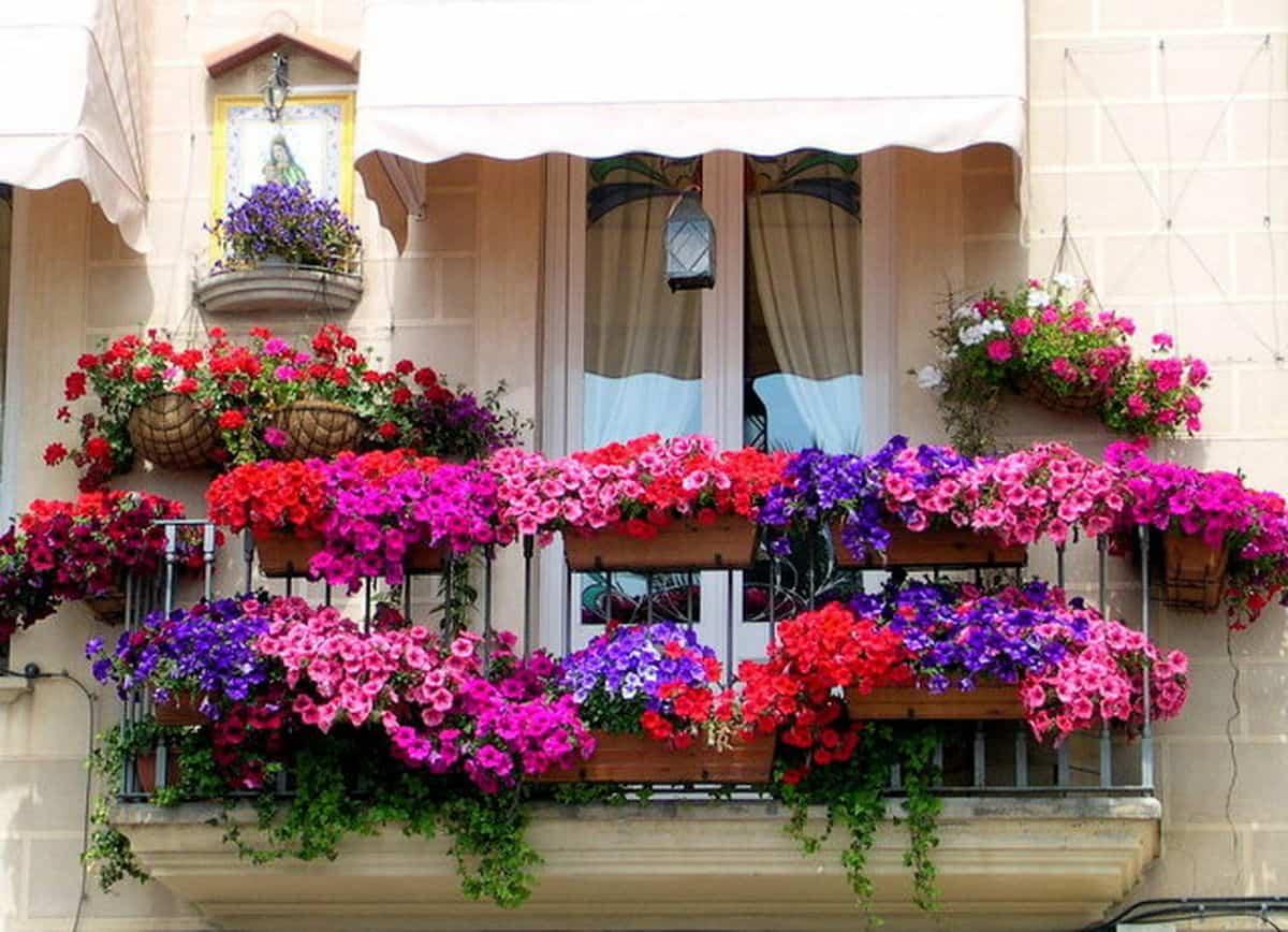 flores para decorar el balcon en primavera 1