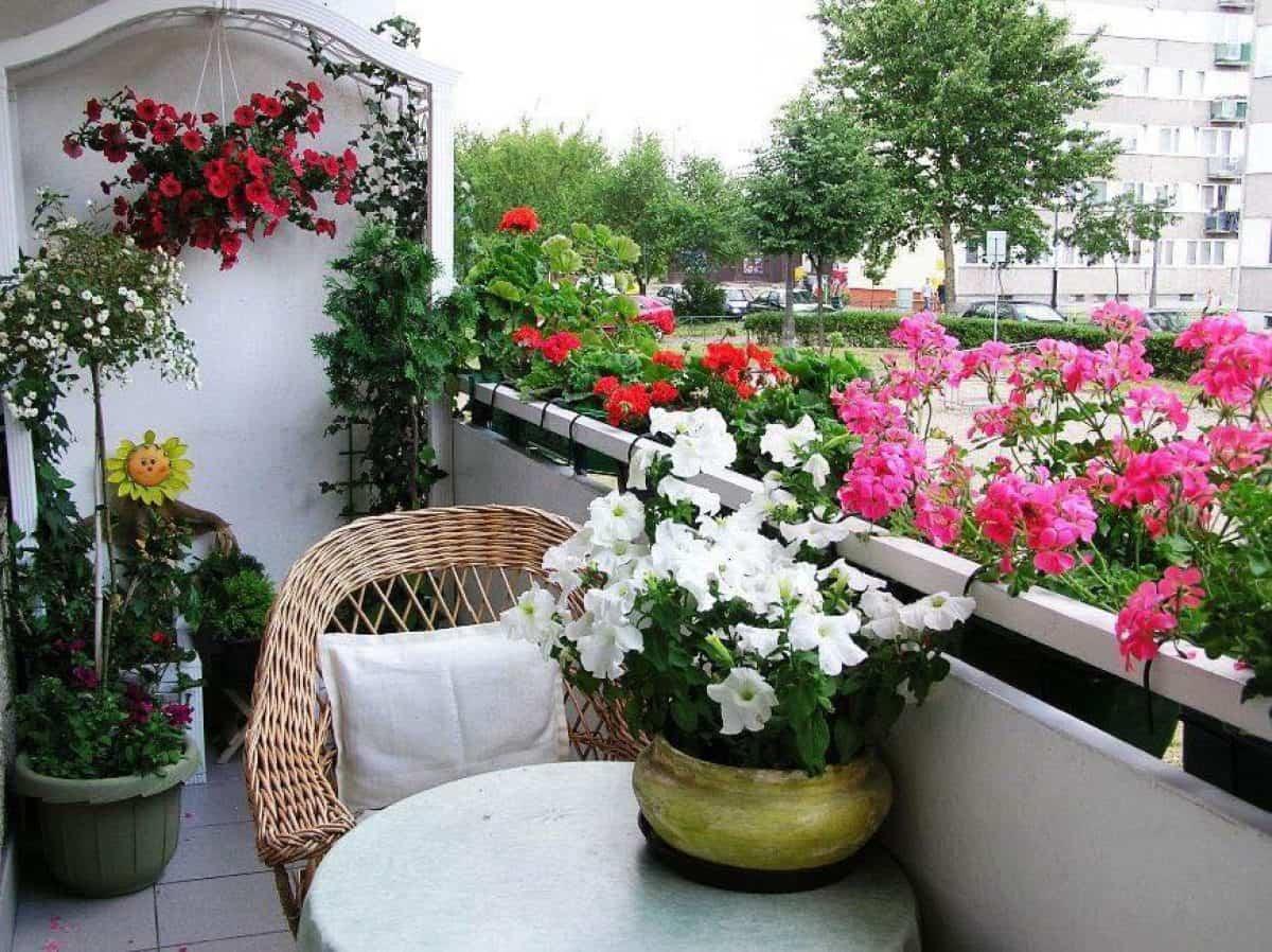 flores para decorar el balcon en primavera 2