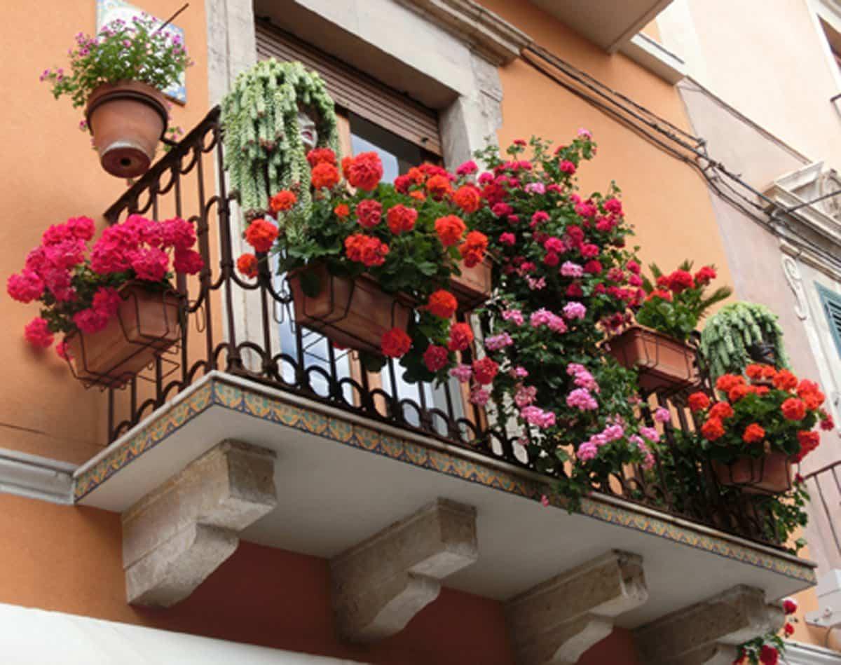 flores para decorar el balcon en primavera 3