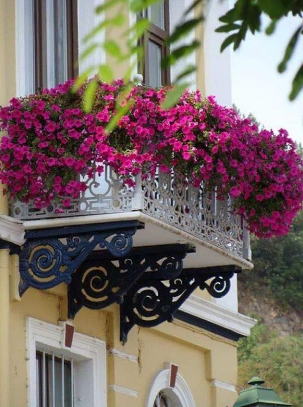 flores para decorar el balcon en primavera 4