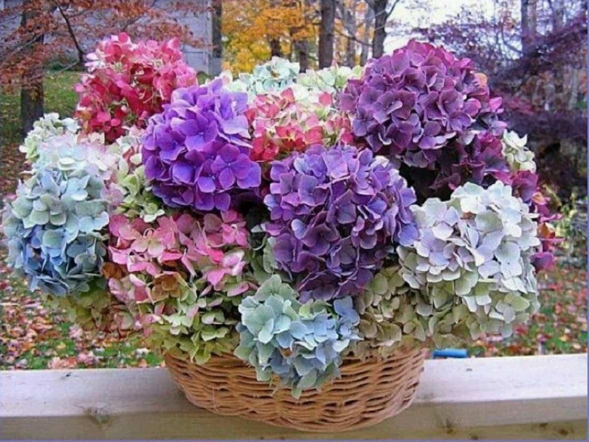 flores para decorar el balcon en primavera 5