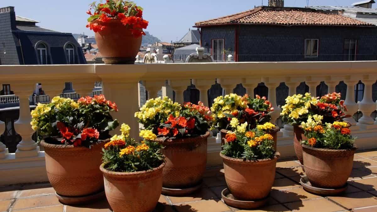 flores para decorar el balcon en primavera 6