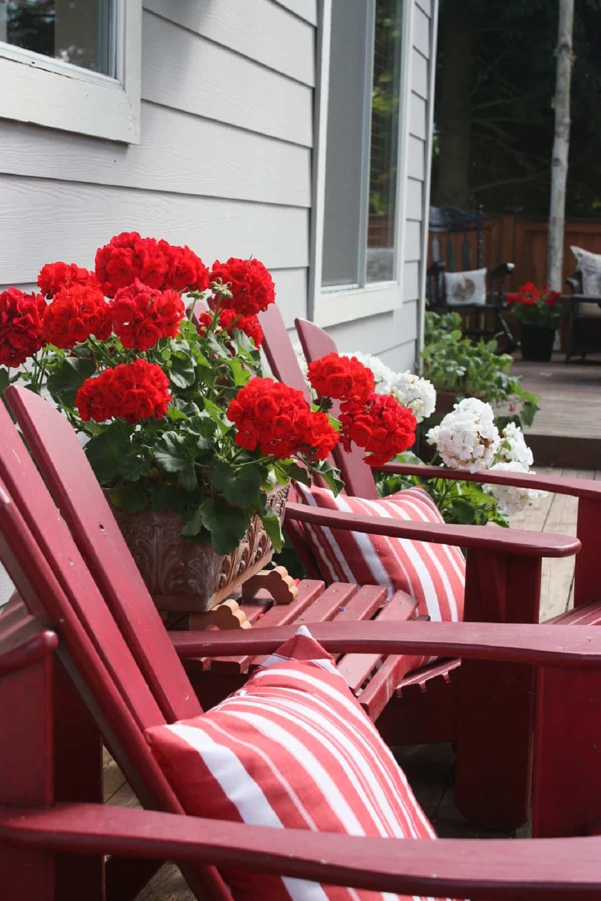 flores para decorar el balcon en primavera 7