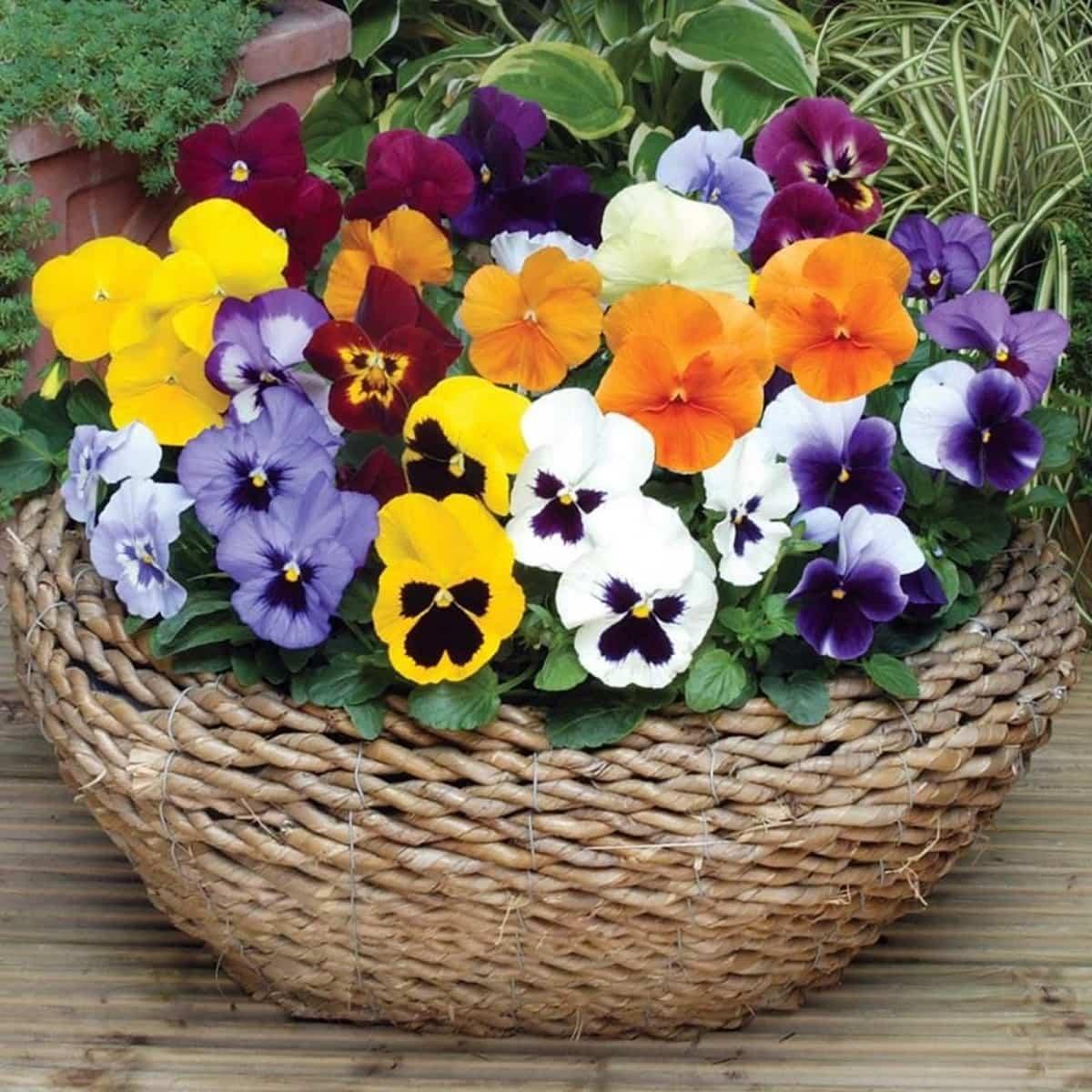 flores para decorar el balcon en primavera 9